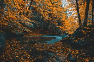 AMS im Herbst